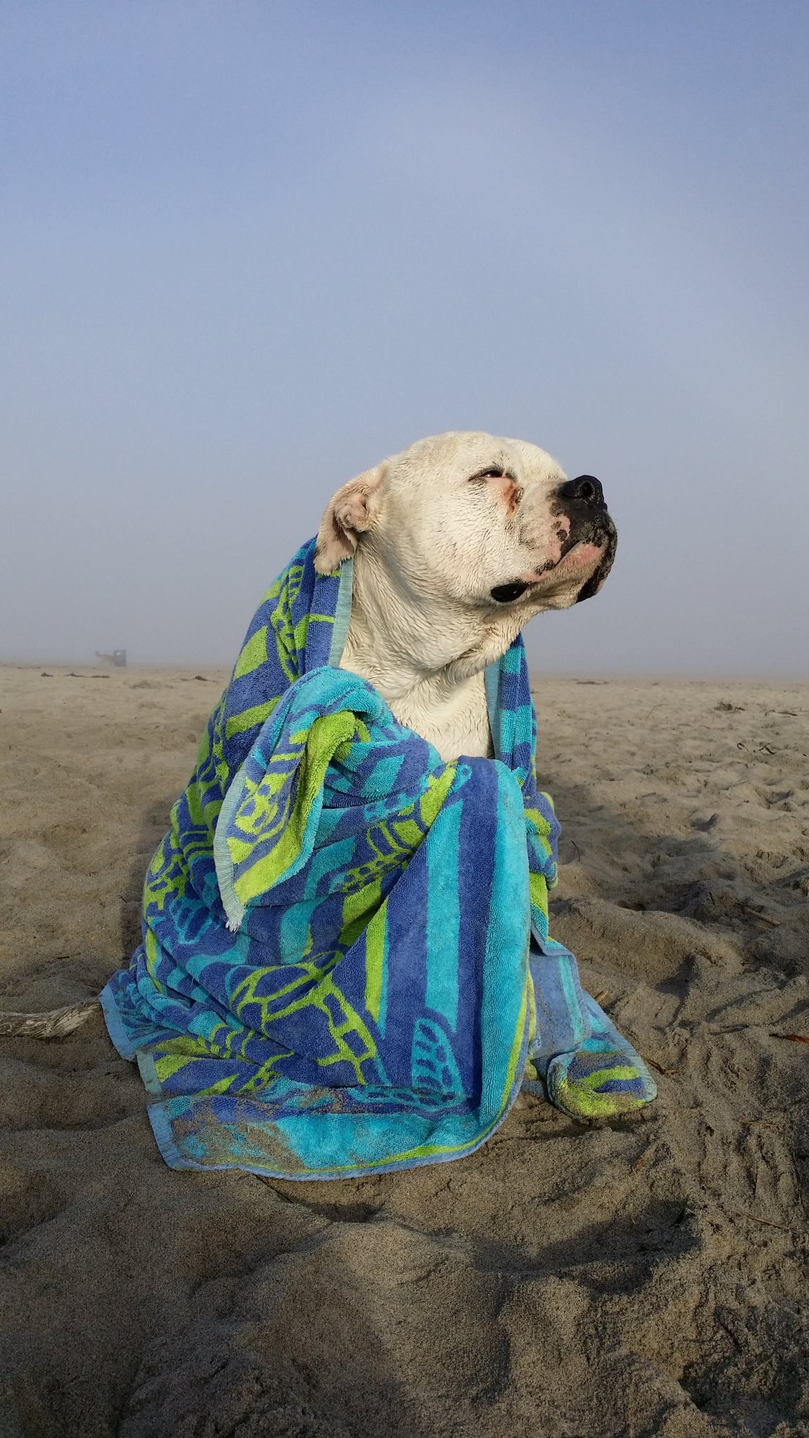 Josephine enjoys the breeze after playing on the beach. (Sonya Timko)